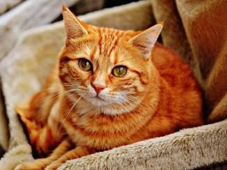 Stan pro kočky