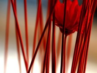 Kvalitní sušená květina